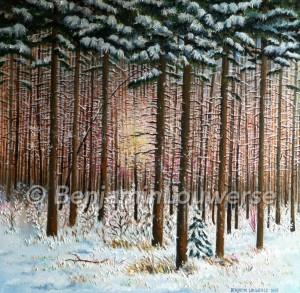 Dennenbos in de sneeuw